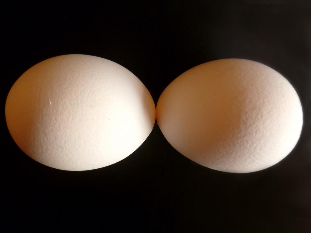 Frischer Eier für Mayonnaise