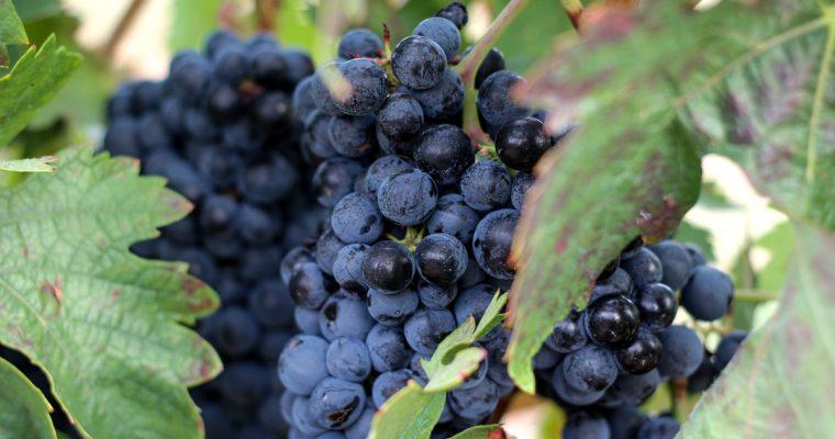 Zu Besuch auf dem Campo Viejo Weingut in Rioja
