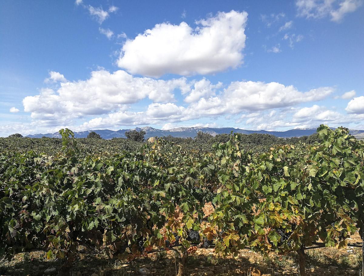 Weinernte Rioja
